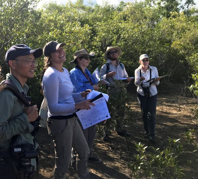 Image of an active group of MangroveWatch Cairns.