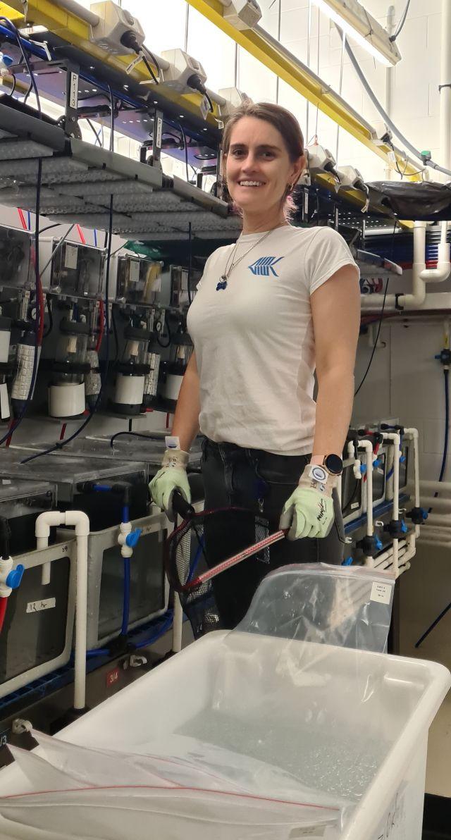 Image of Amanda working with barramundi in the SeaSim at Australian Institute of Marine Science.