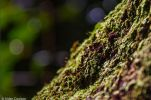 Close up of moss on tree